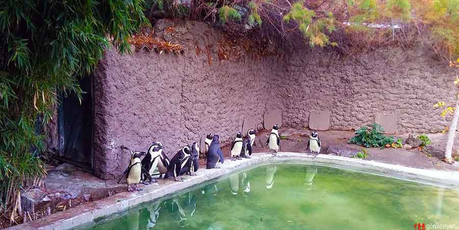 Darıca Hayvanat Bahçesi